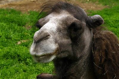2010 CAMELS