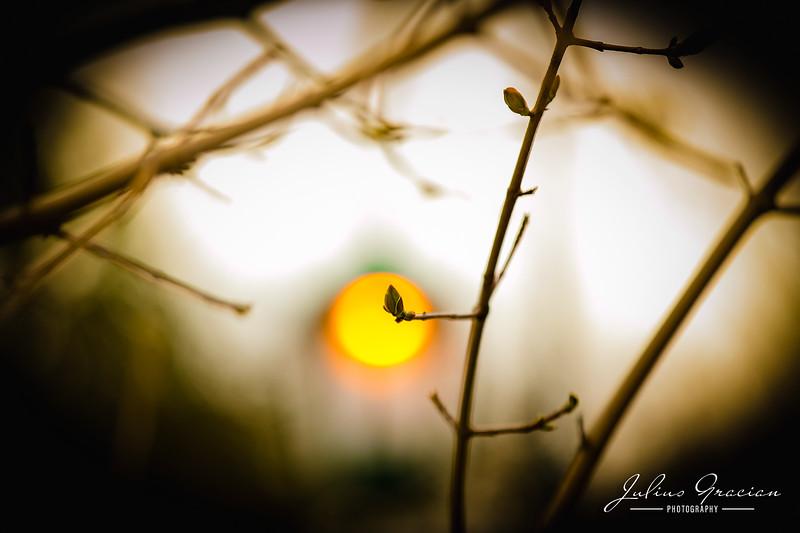 Julius-Gracian-Photography-01.jpg