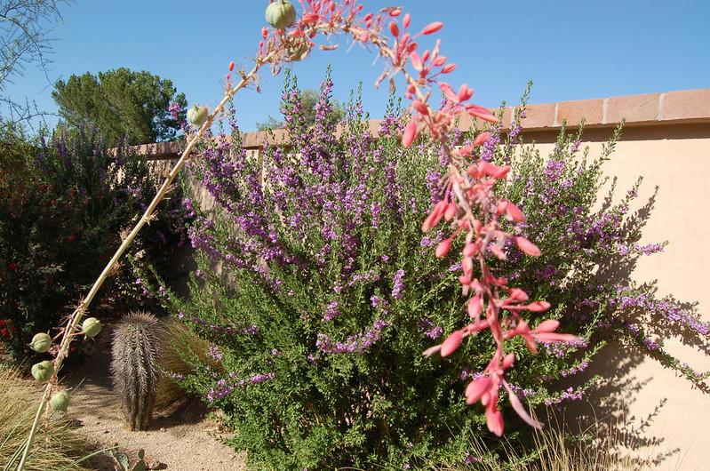 20120607_Scottsdale Back Yard_011.JPG