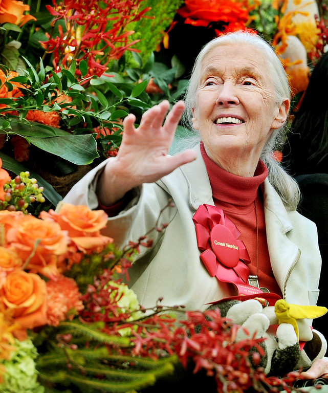 . Grand Marshal Dr. Jane Goodall, in the 124th Rose Parade. (Photo by Walt Mancini/Pasadena Star News)