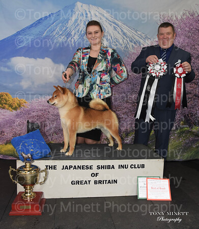 Japanese Shiba Inu Club of Great Britain