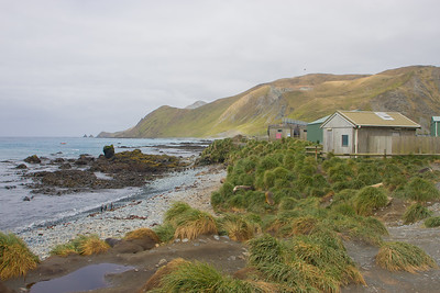 Macquarie Island