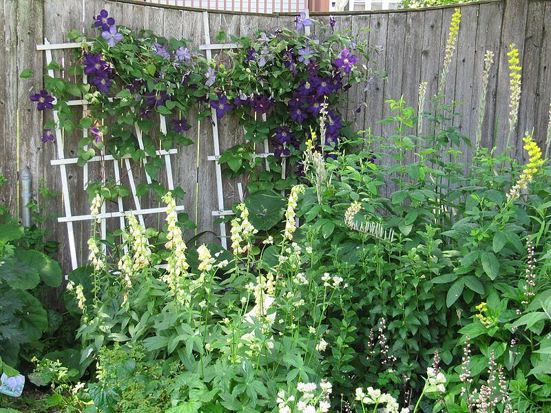 garden-2009-06-0745_std.jpg