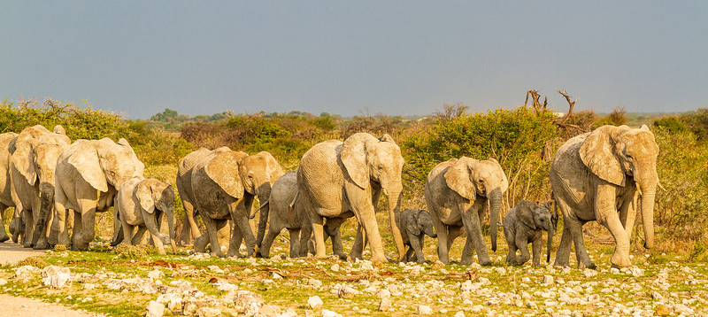 elephant group leave Klein Okevi (1 of 2).jpg