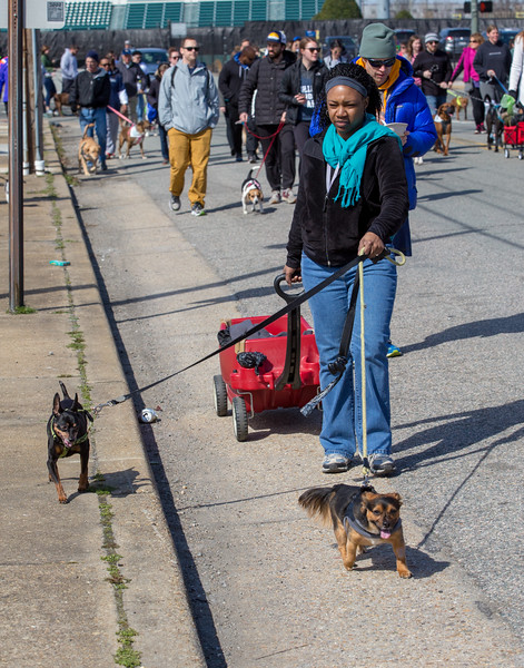 Richmond Spca Dog Jog 2018-790.jpg