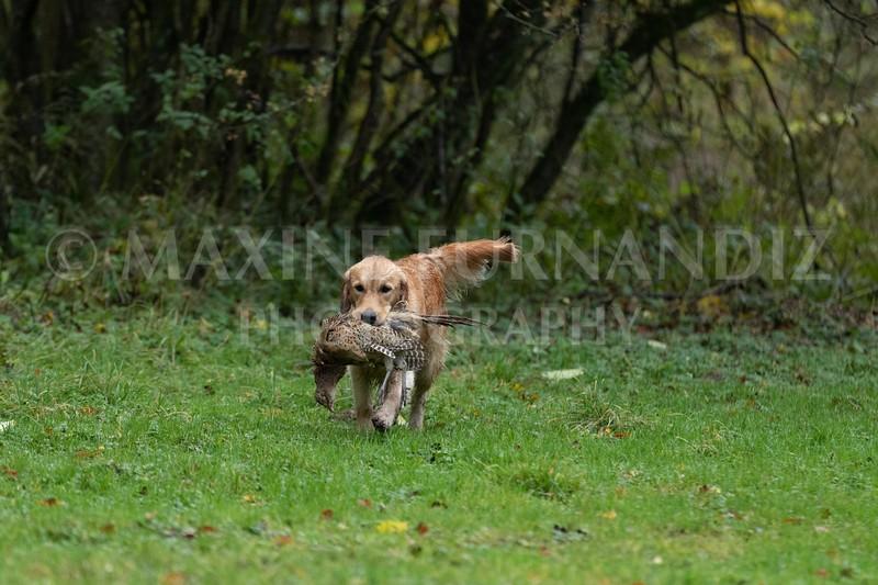 Dogs-4691.jpg