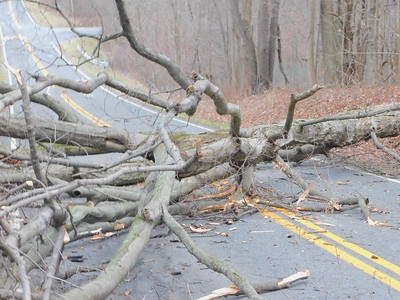 High winds take down trees, power lines