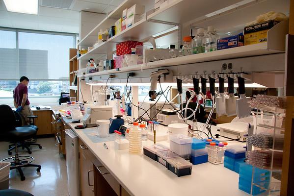 Ivan D'Orso's Lab