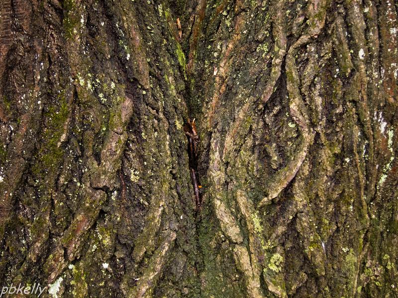 bark 013013-5.jpg