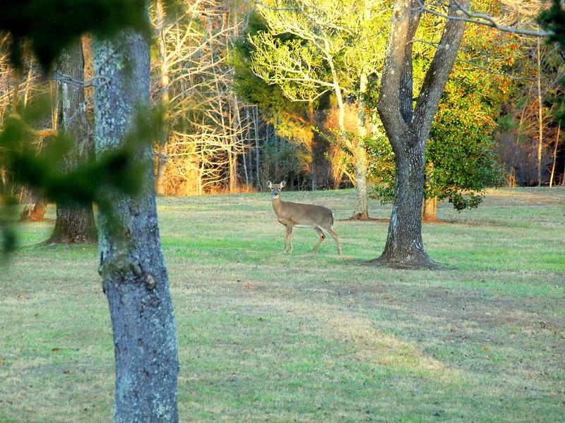 Deer Apco-032.JPG