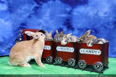 Rabbit Babies-12-26-19