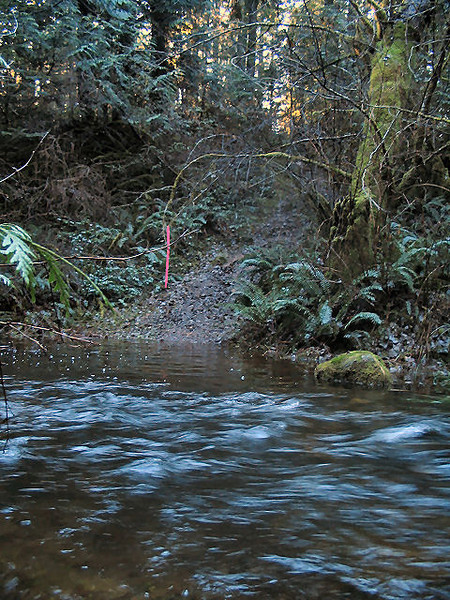 2004 Stewart Mountain XC - The Stream Just Before the Runners Come Through