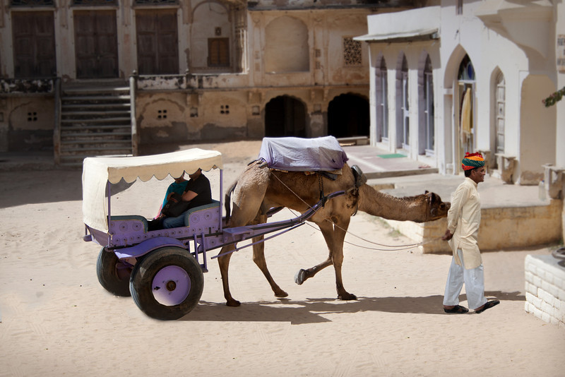 An Indian cameleer giving rides