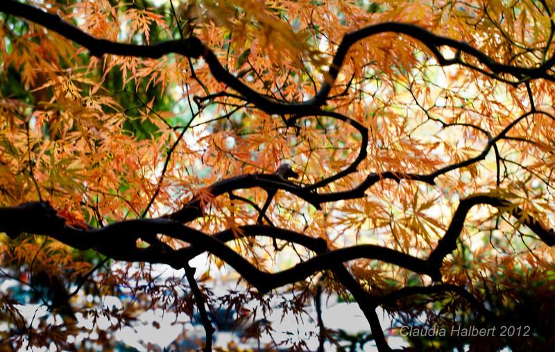 Oregon_Oct_2011-10-5.jpg