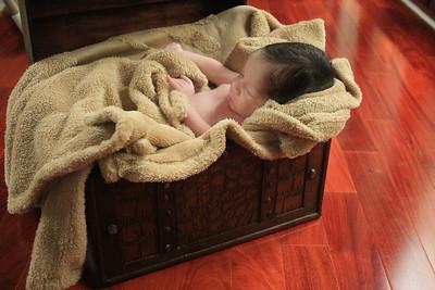 Gray Newborn Portraits