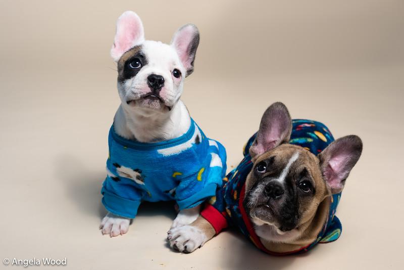 Puppies46.jpg