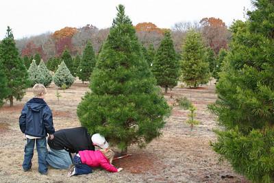 2008 November 29-Christmas tree hunting