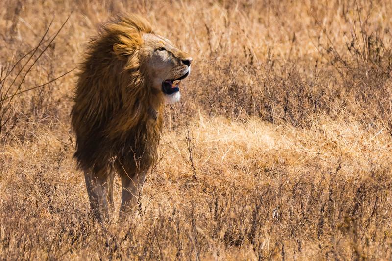 Tanzania-safari-24.jpg