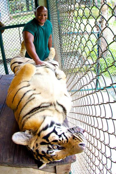 QT Tiger3.jpg