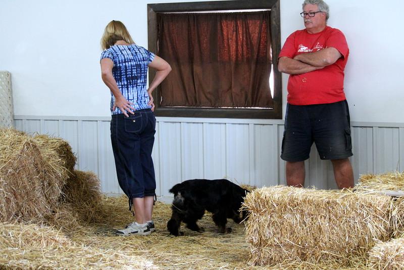 20160710 Winnegamie Barn Hunt Trial (14).JPG