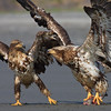 Eagle Scrap