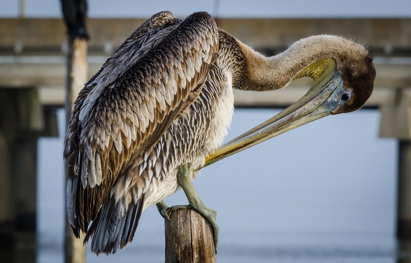 Pelican 2-1048.jpg