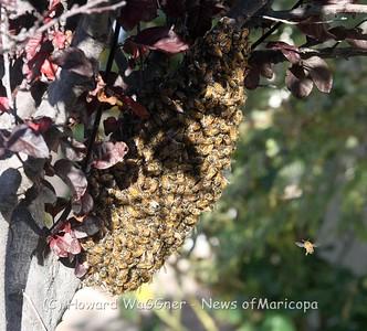 Bee Swarm 1-8-2020