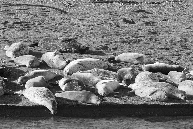 Sonoma Coast - Seal Harbor ref: f2c9ccfc-339a-4e69-935f-2e3ad5e2d5aa