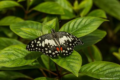 Butterflies & Moths 2018 - Incorrect Camera Settings - Set 1