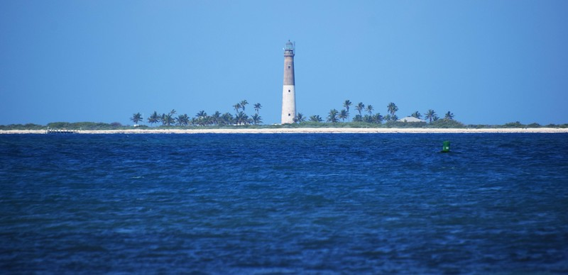 Lighthouse surrounded by palm trees