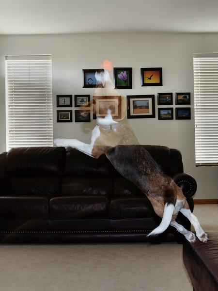 Super Dog 05 Ghost