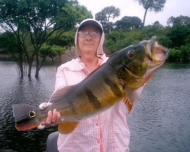 Peacock Bass Fishing in Brazil