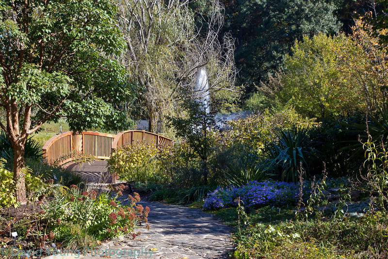 meadowlark 10-17-10-11.jpg