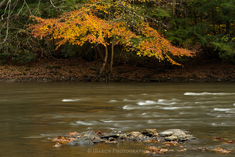 IMGP9189 fall foliage on slippery rock creek.jpg