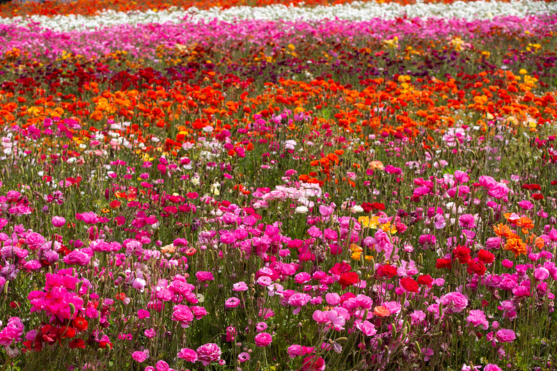 Spring Flowers B-437.jpg