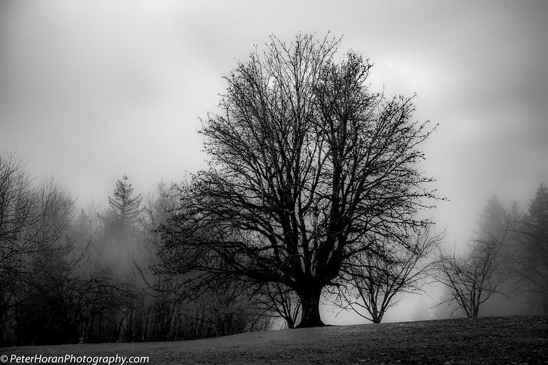 ghost-trees-401-of-14_50639191416_o.jpg