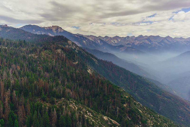 Rui in Sequoia-07084.jpg