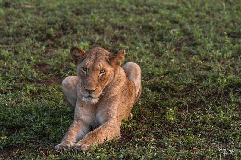 Lion_1399.jpg
