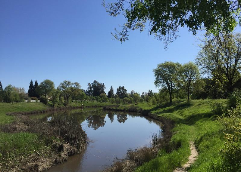 laguna spring.jpg
