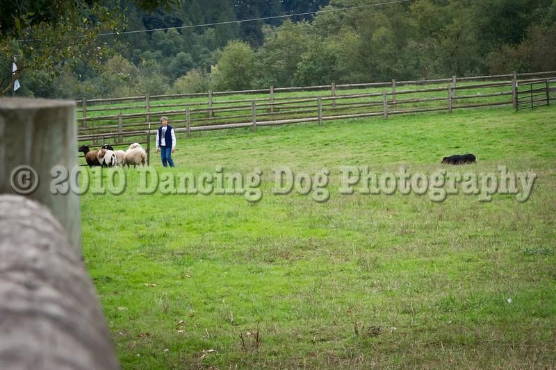 PacNW_HT_Sun_Sheep-6765