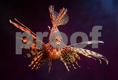 the-2nd-lone-star-lionfish-symposium-hosts-public-forum