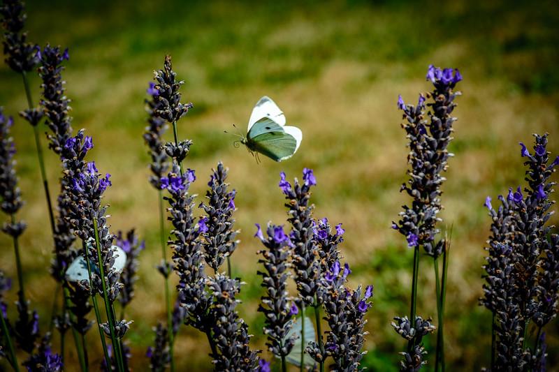 Float like a Butterfly....