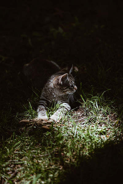 Girls & Kittens, July 1st - 13.jpg