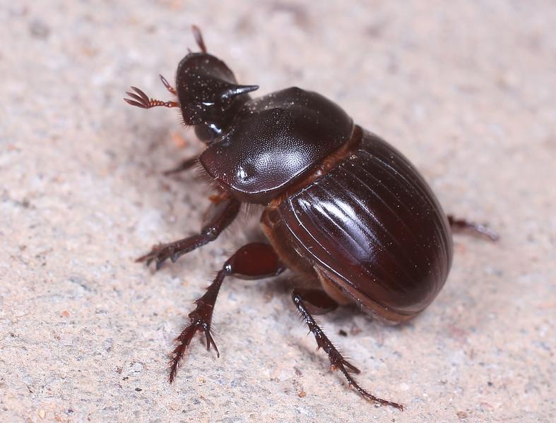 Beetle_1.jpg