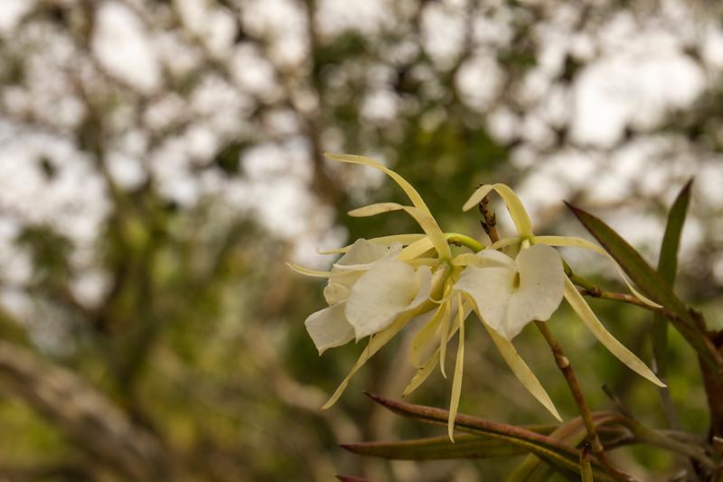 nanaples_botanical_garden_0011-LR.jpg
