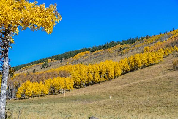 10-1-15 Fall Colours