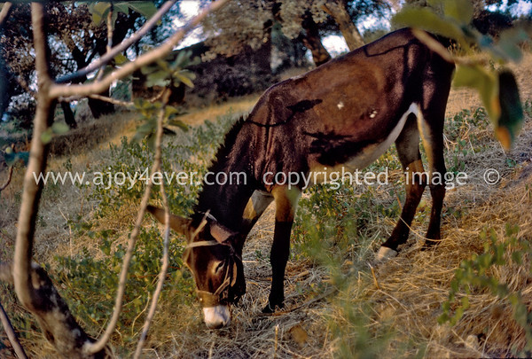"B_""ajoy4ever"" welcome, avanti please enter"" donkey and man's best friend ""archival"" images"