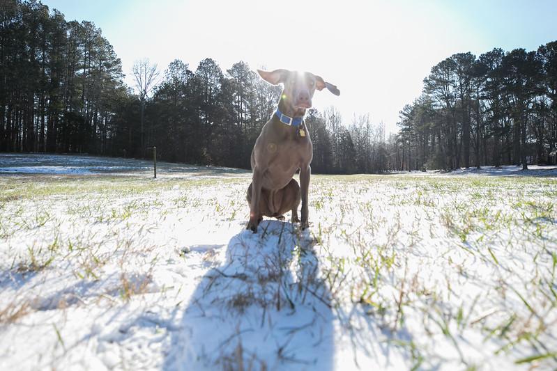January Snow-7.jpg