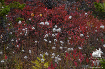 Blueberry Mountain (Evans Notch) 10-20-19