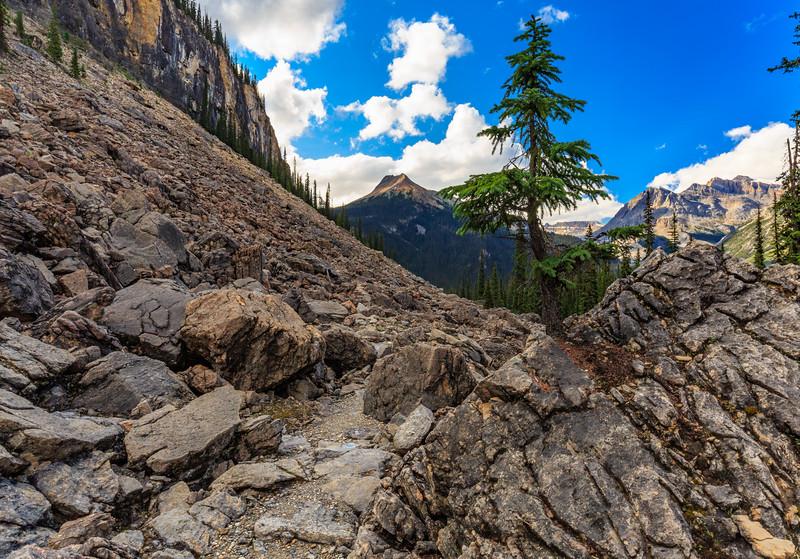 A Tree Grows In Rock